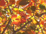12-20-2012 Red Gold and Green.jpg