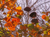 12-20-2012 Red Gold and Green 2.jpg