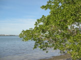 Lemon Bay