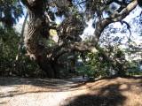 Indian Mound Park 123012 12.JPG