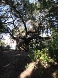 Indian Mound Park 123012 17.JPG
