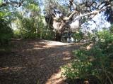 Indian Mound Park 123012 18.JPG