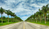 Palm tree-lined highway