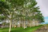 Aviary, Tagum Energy Park