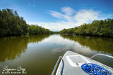 Mangroves in river cruise