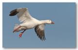 oiseaux_aquatiques_rivages_2012