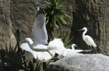 Barcelona Zoo, Wild Breeding Birds.
