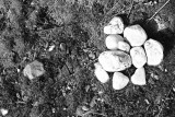 17 White stones seek a convert