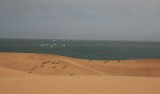 Pelicans on the Dunes