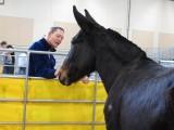 2013 Horse Expo