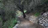 trail tree.jpg