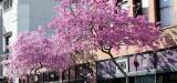 Pasadena Spring