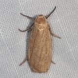 Hodges#8045.1 * Pale Lichen Moth * Crambidia pallida