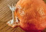 the inside of an orange