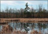 Winter at the Marsh