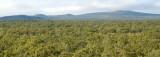 Undara savanna landscape