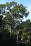 lava tube vine-thicket