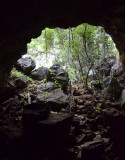 lava tube entrance and vine-thicket