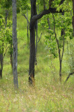 savanna Kalkani Crater
