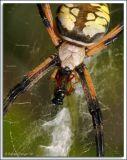 Spider_D2C_3282.jpg