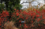 November 15, 2009 - Brooklyn Botanic Garden