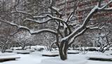 Winter February 8-9, 2013 - WSV Sasaki Gardens Landscape