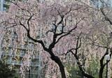 Spring 2013 - WSV Sasaki Garden and Landscape