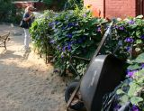 Watering the Morning Glories in the Dog Run