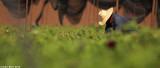 IMG_7648.jpg  Picking anemones
