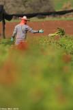 IMG_7710.jpg  Picking anemones