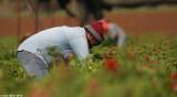 IMG_7721.jpg  Picking anemones