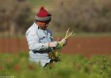 IMG_7629.jpg   Picking anemones