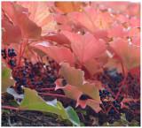 interesting_autumn_images