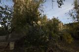 Aspendos december 2012 7368.jpg