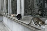 Istanbul december 2012 6026.jpg