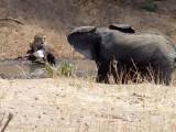 The wildlife of Tanzania