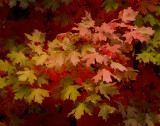 Autumn Color, 4th of July Canyon