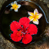 Flowers in Stone Vase