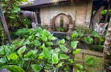 Garden Pond, Bebek Tepi Sawah Villas