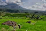 Jatiluwih's Expansive Rice Fields