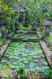 Gardens at Cafe Wayan
