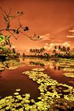 Balinese Dreams