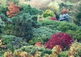 06 kubota gardens
