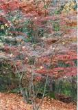 14 arboretum