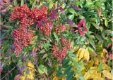 15 kubota gardens