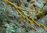 61 moss and cedar