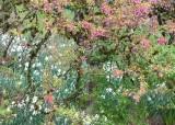 15 a wild garden