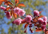 Blossom Walks