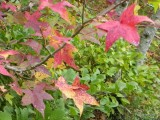 We DID Find Fall Color!