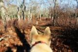 Dogs View.jpg